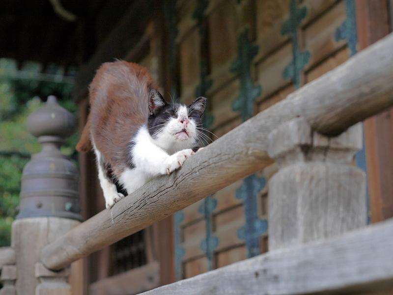 欄干上の黒白猫3