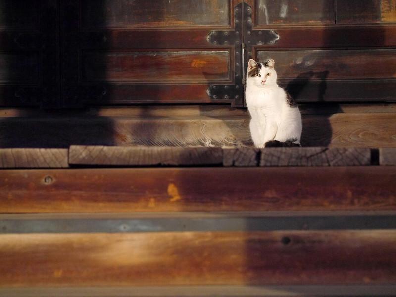 お堂階段の白キジ猫2