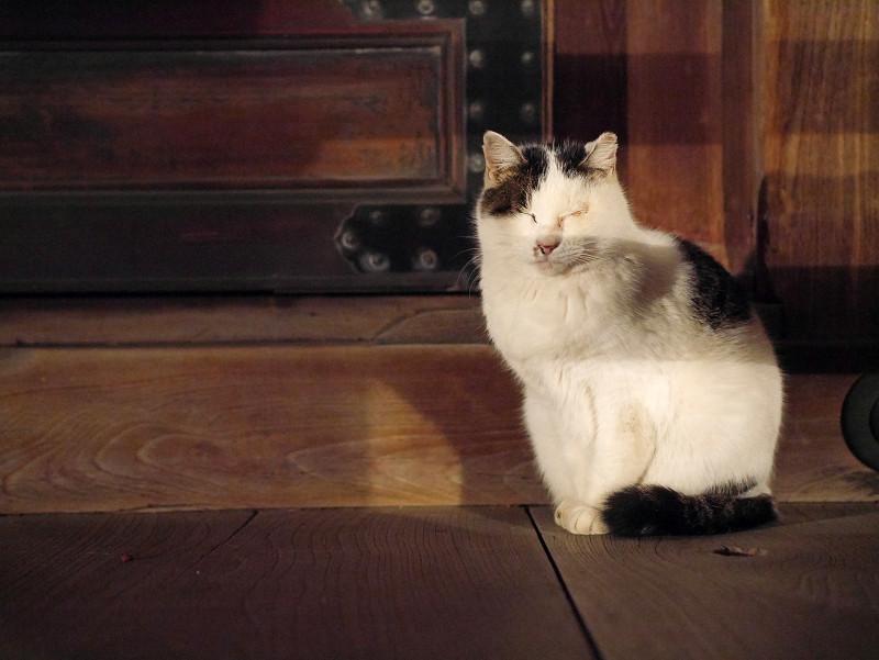お堂階段の白キジ猫3