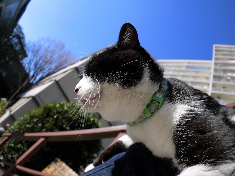 青空と黒白猫