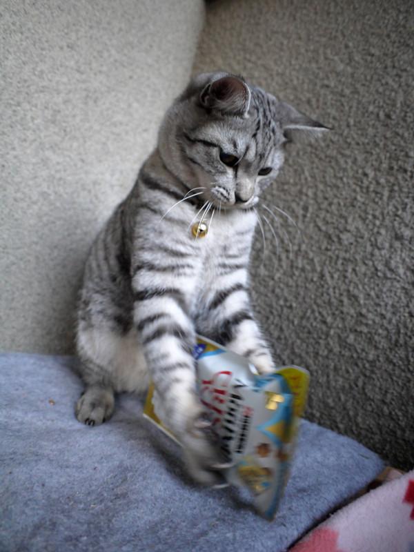 フード遊びのサバトラ猫2
