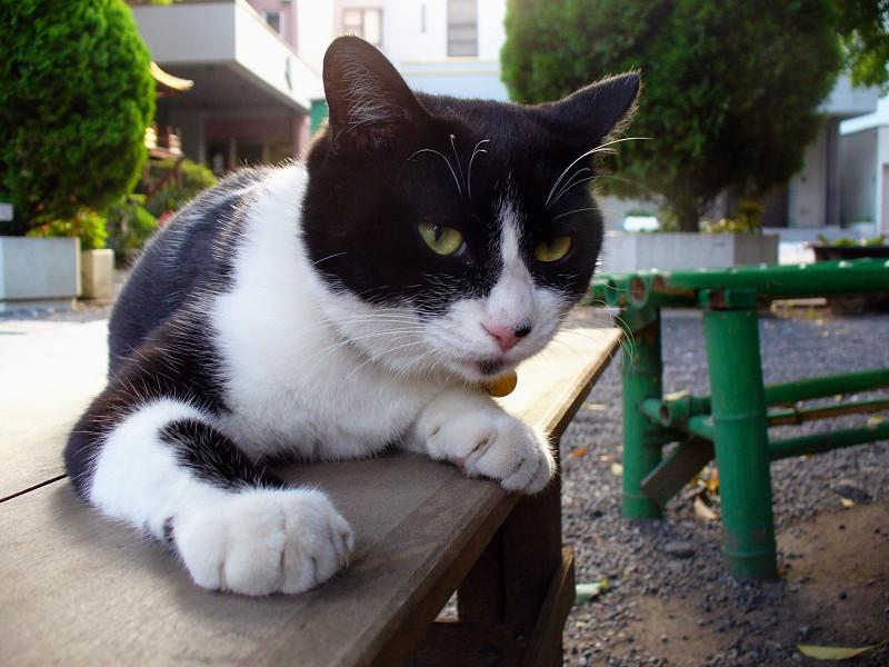 ベンチに乗ってる黒白猫2