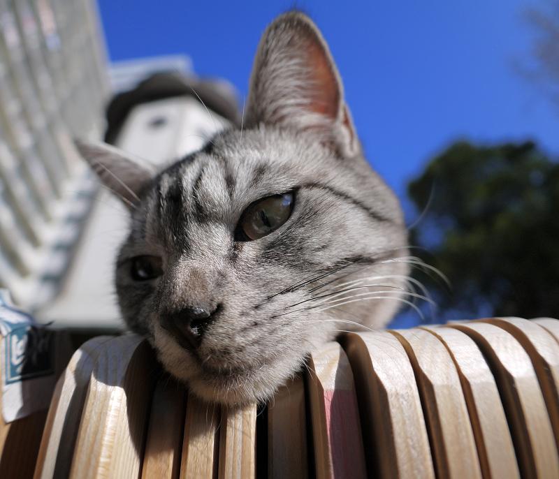青空とサバトラ猫