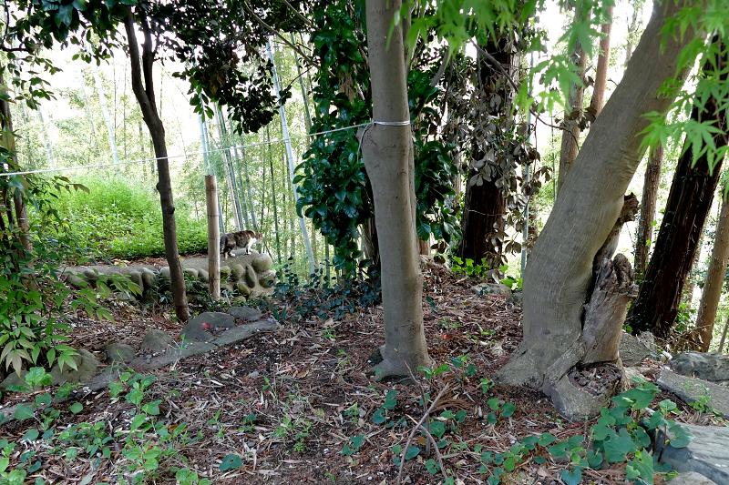 森の中の猫