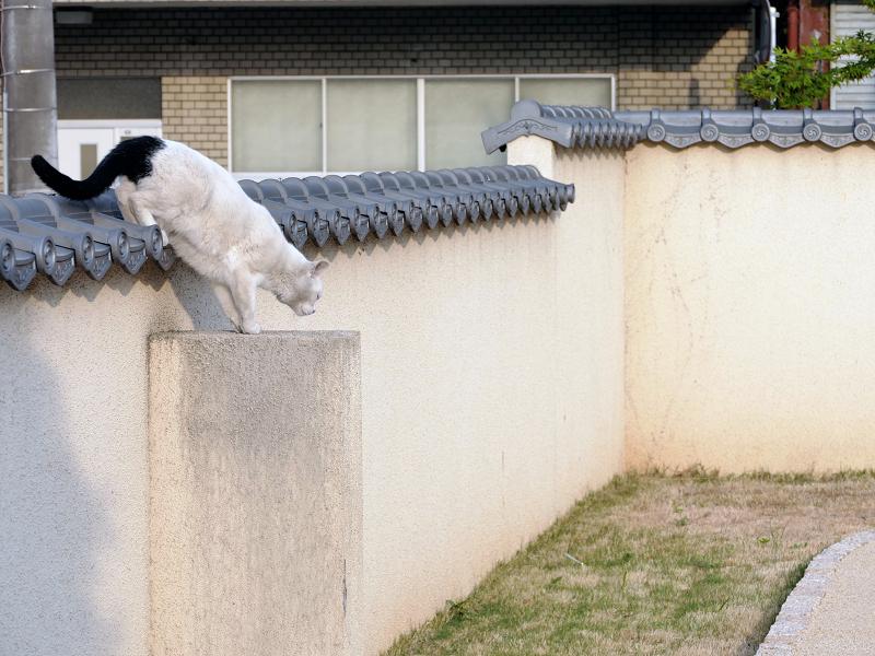 塀瓦上の白黒猫3