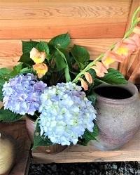 7月12日 業平園 紫陽花