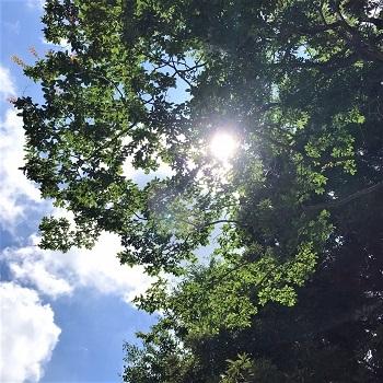 8月 お寺 太陽