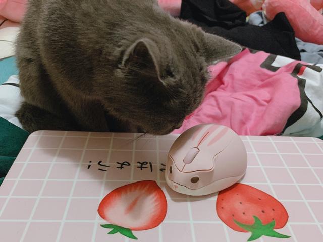 Akko_Hamster_Mouse_06.jpg