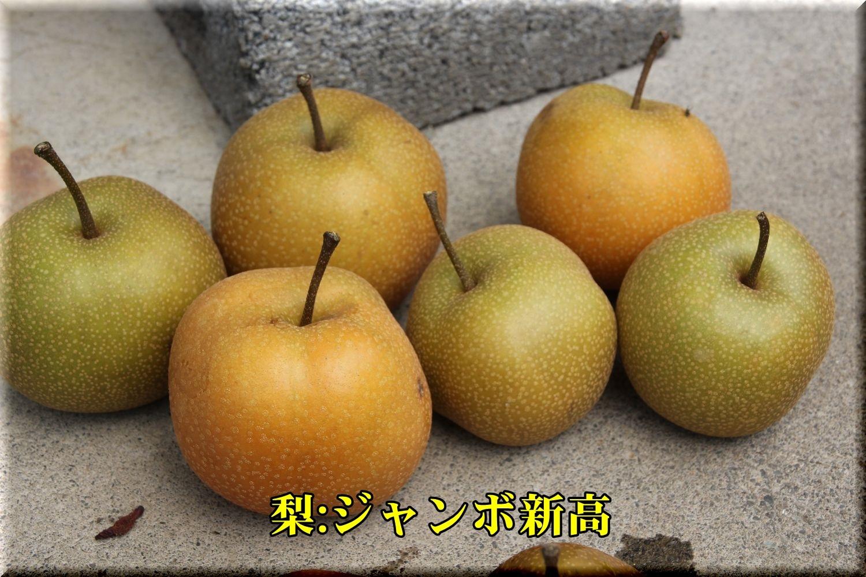 1Jnita190826_042.jpg