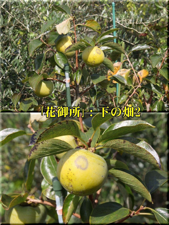 1hanagosyo191001_014.jpg