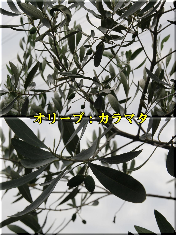 1kalamata190721_008.jpg