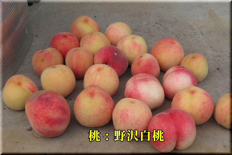 1nozawahakutou190707_015.jpg