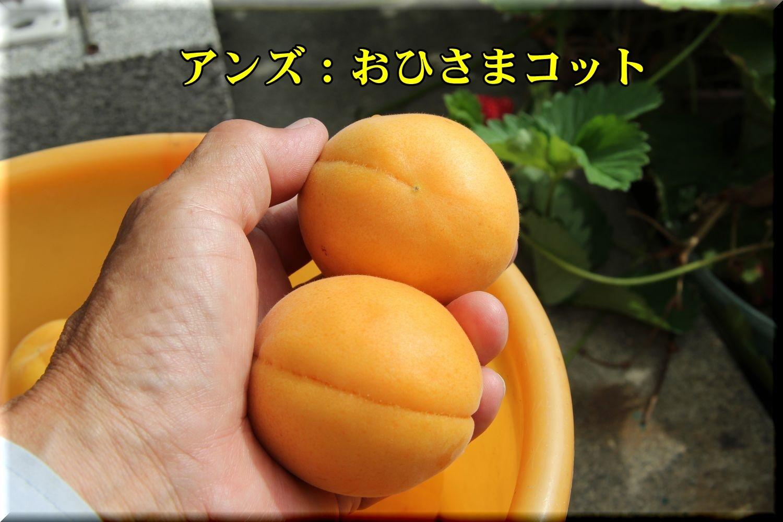 1ohisamacot190627_010.jpg