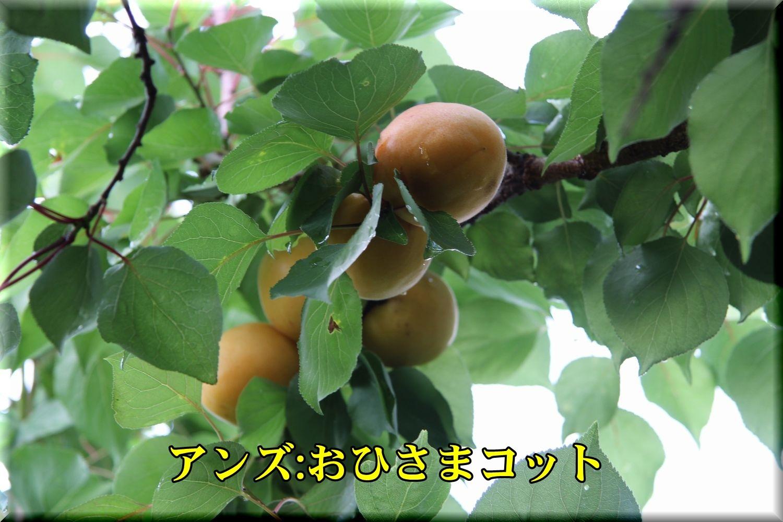 1ohisamacot90625_008.jpg