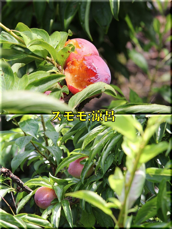 1suzuro190625_039.jpg