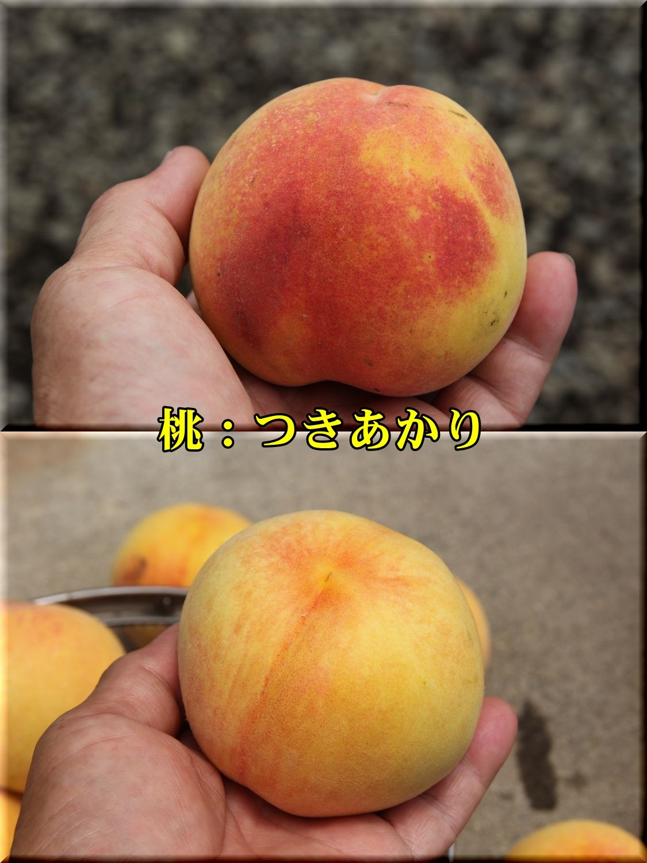 1tukiakari190713_001.jpg