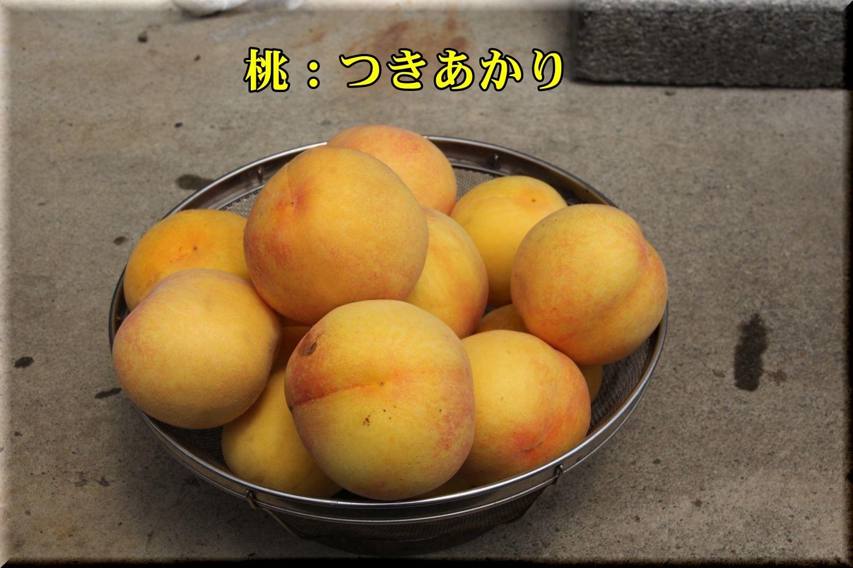1tukiakari190717_004.jpg