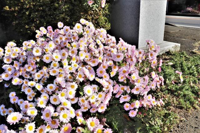 IMG_6715 (2)