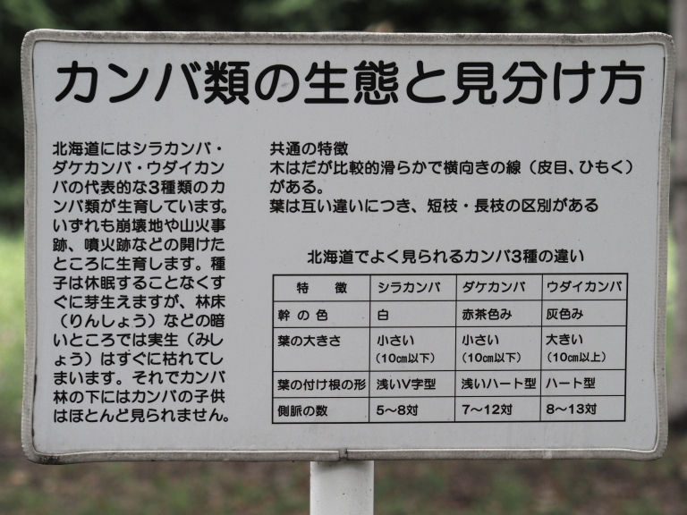 f-カンバ類の見分け方-2019-08-20森林総研-M1200183