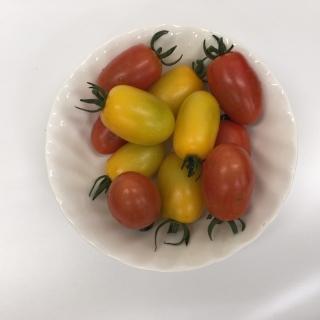 ひめトマト_06