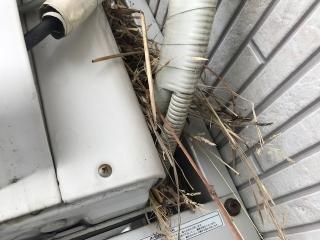 鳥の巣駆除_6