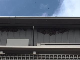 蜜蜂の駆除_02