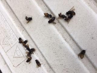 蜜蜂の駆除_08