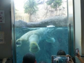 白クマの巨体