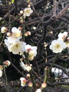 春探し_01