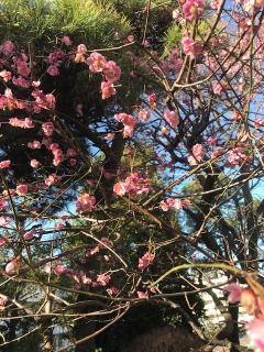 春探し_02