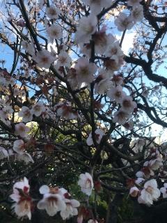 春探し_03