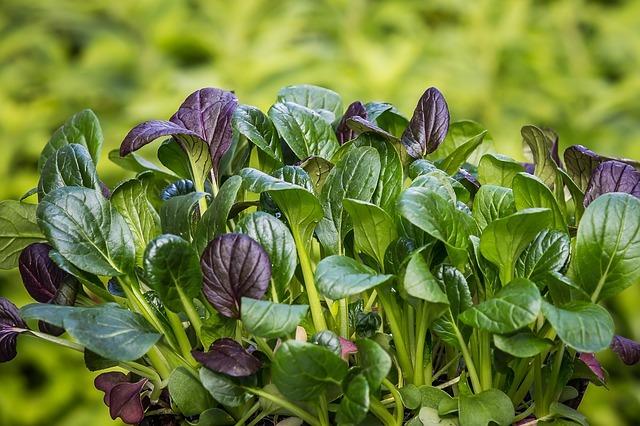 spinach-2310134_640.jpg