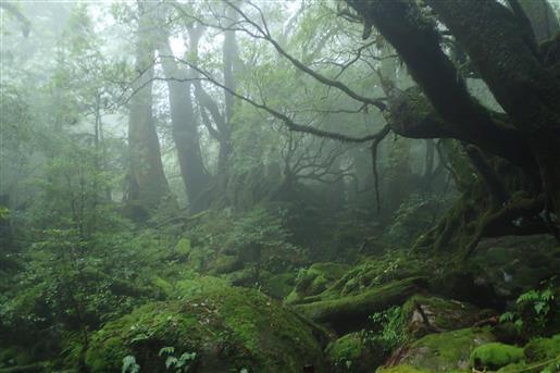 8月14日 苔むす森