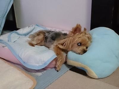枕にしてる