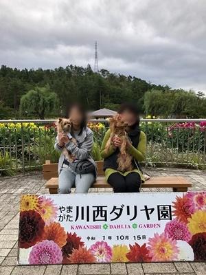 川西ダリア園_191017_0002