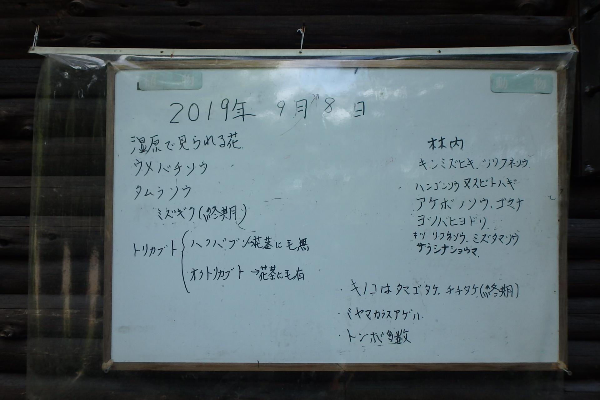 P9154469.jpg